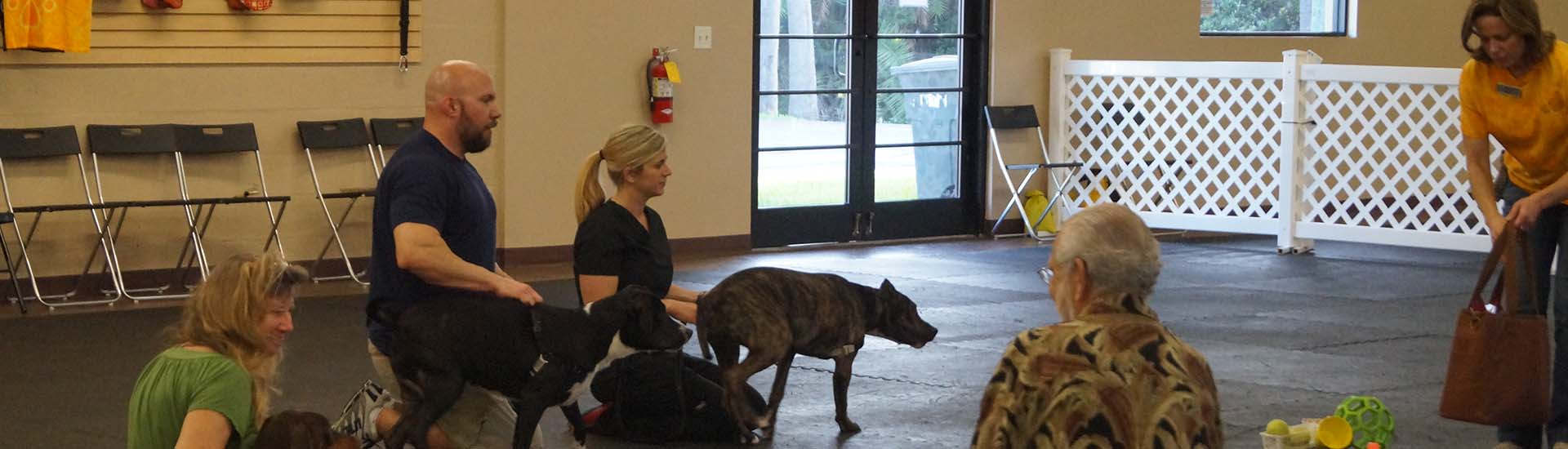 Dog Training at Dogism